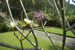 4.Front garden
