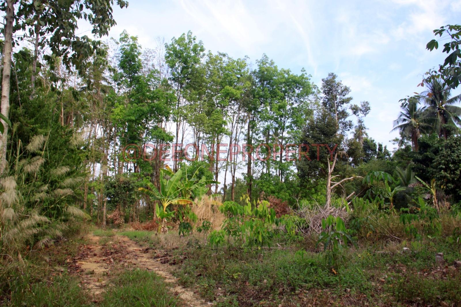 5 Rai Flat Land for Sale – Dan Mai, Koh Chang
