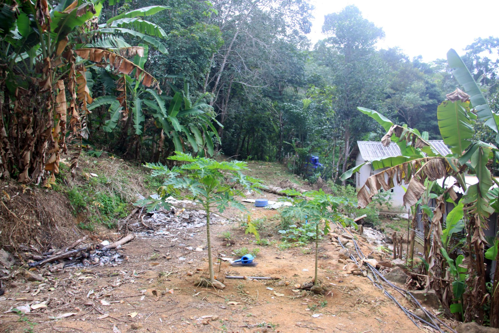 Land on the Hill for Rent – North West Coast, Koh Chang