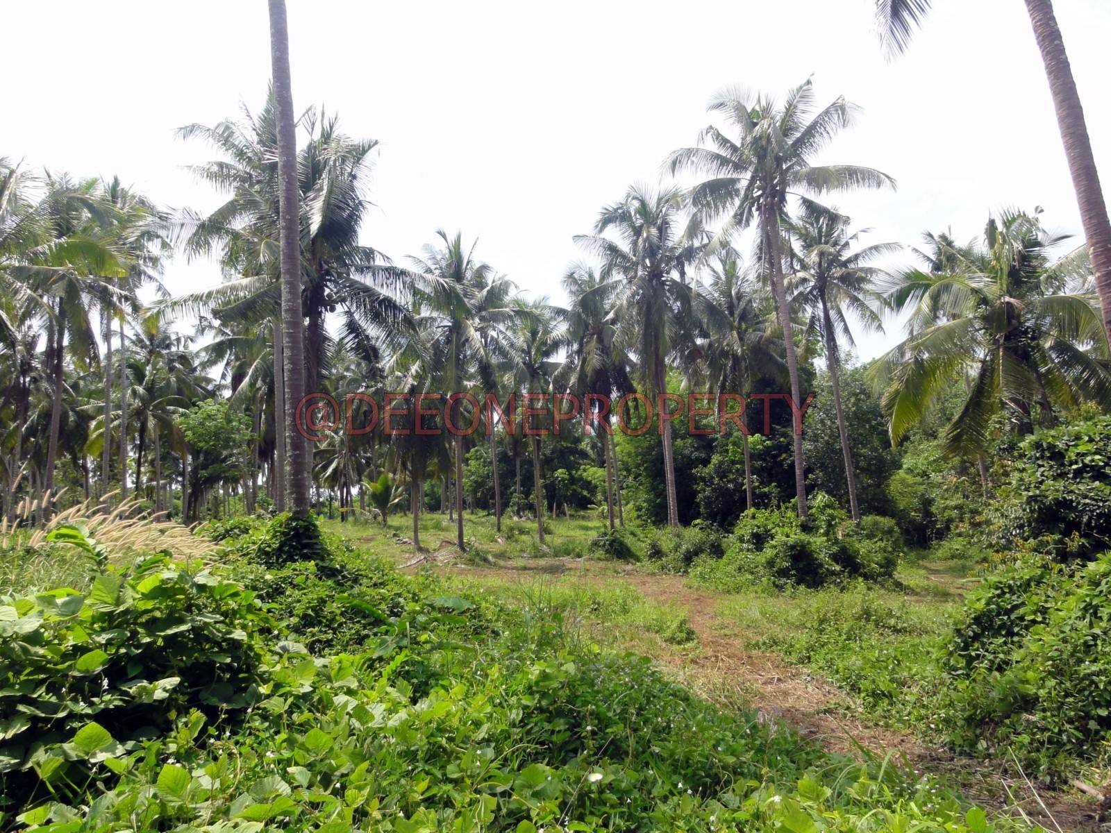 靠近海滩及码头宽带土地出售 -库德岛 (Koh Kut)