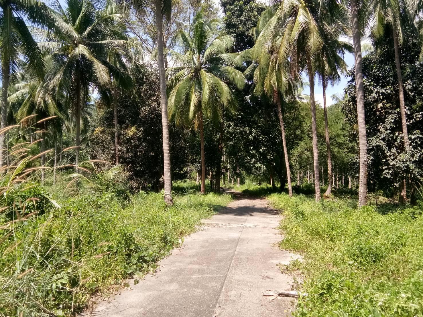 Massive Land Close to the Sea for Sale – Bang Bao, Koh Chang