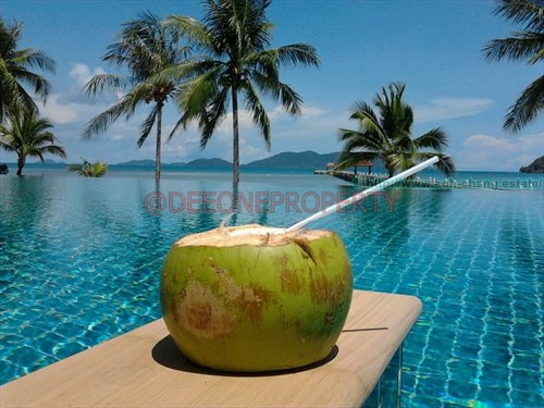 coconut- swimming pool