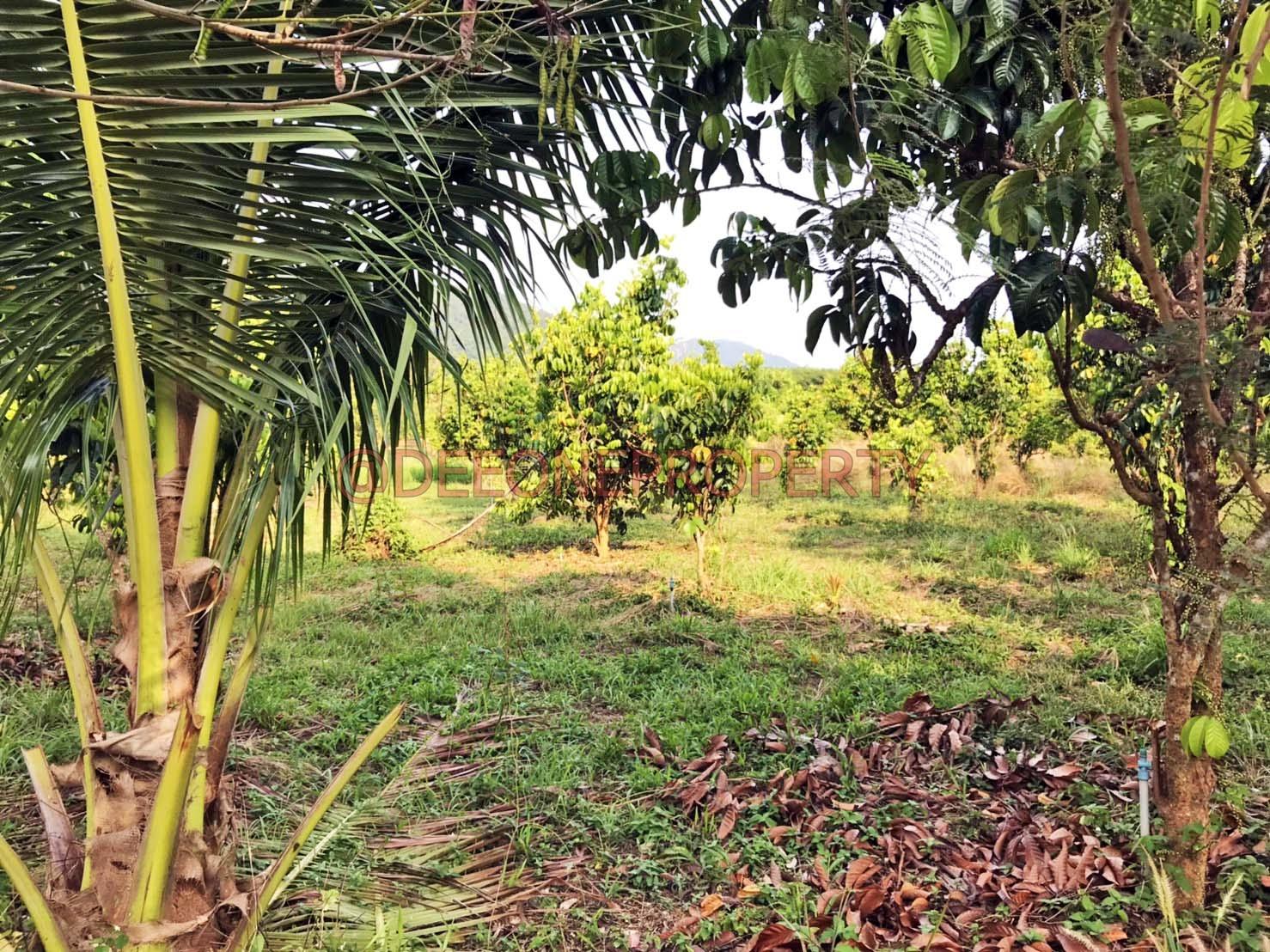 Big Flat Land next River for Sale – Salak Phet, Koh Chang